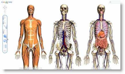 Google Body Browser: navigazione dettagliata del corpo umano in 3D